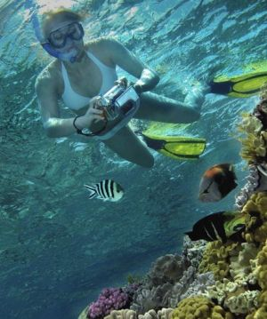 Calypso Reef Charters - Whitsundays Tourism