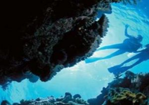Deep Sea Divers Den - Whitsundays Tourism