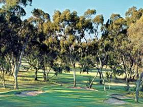 Tanunda Pines Golf Club - Whitsundays Tourism