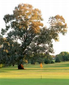 Cowra Golf Club - Whitsundays Tourism