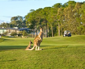 Sanctuary Cove Golf and Country Club - Whitsundays Tourism
