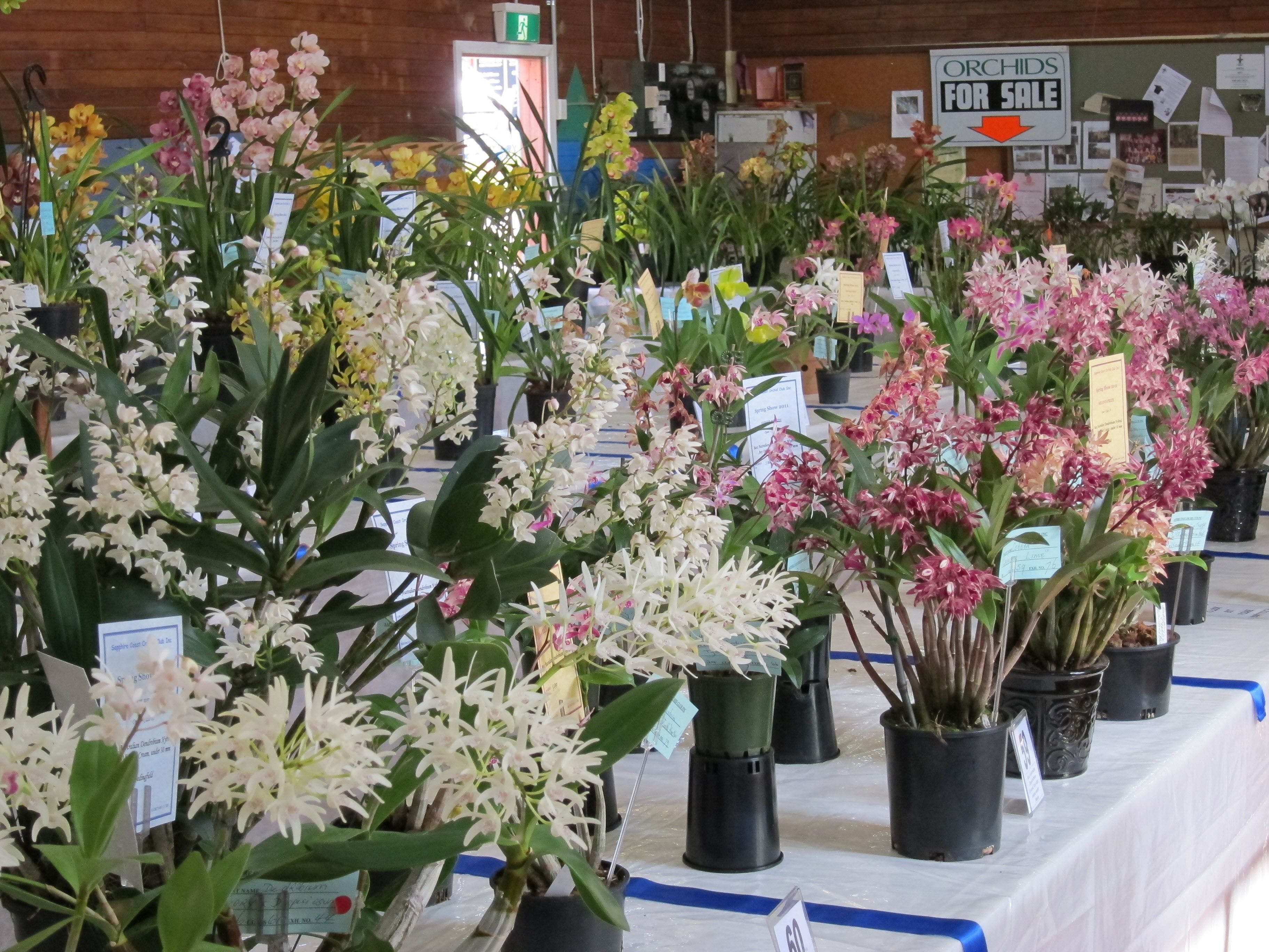 Sapphire Coast Orchid Club Spring Orchid Show - Whitsundays Tourism