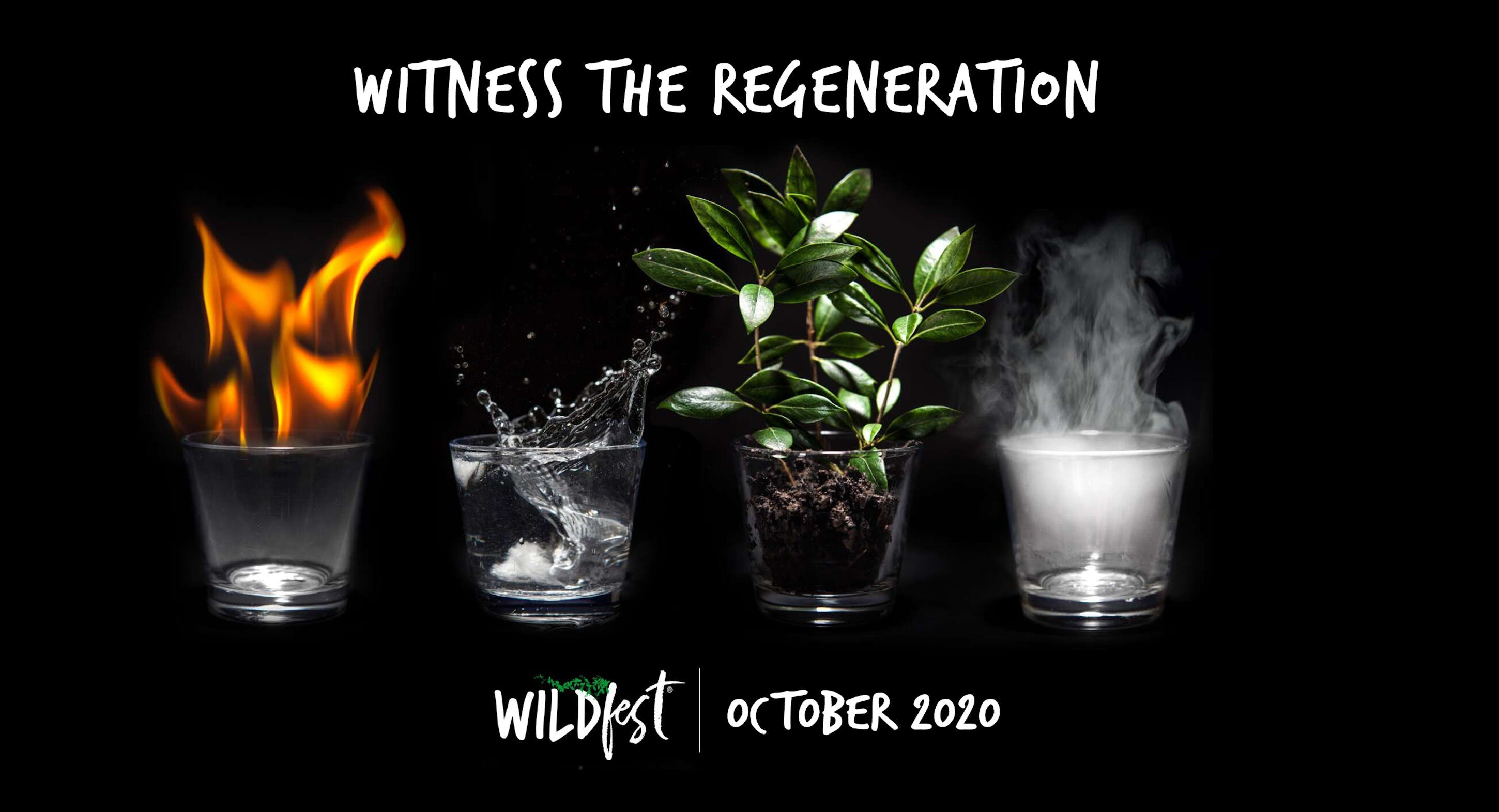 Wildfest - Annual Festival - Whitsundays Tourism